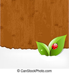 Wood Background With Ladybug