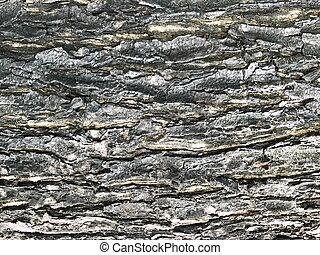 wood, Bark old texture