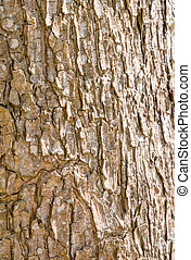 Wood bark texture able to use as background