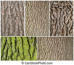 five frames of wodd bark pattern texture background