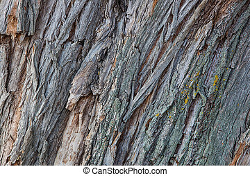 Wood bark texture or background.