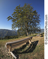 wood bench and tree in mountain landscape