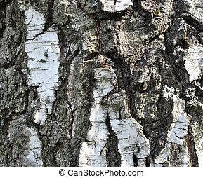 Wood, birch bark