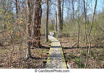wood boardwalk or trail in forest or woods