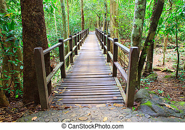 wood bridge in deep forest crossing water stream