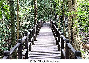 wood bridge in forest