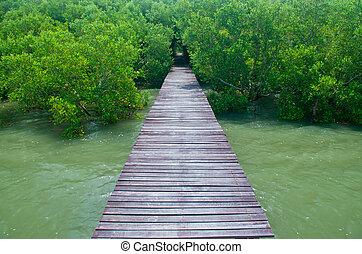 Wood bridge in mangrove forest. Explore nature.