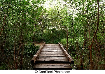 Wood bridge in the forest