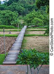 wood bridge on the rice field