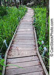 wood bridge walk in the park Pa Hin Ngam National Park in Chaiya