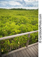 Wood bridge with gold grean leaf field