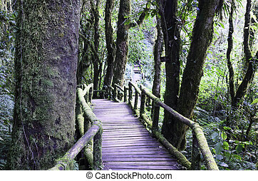 wood bridge for people to walk into the forest