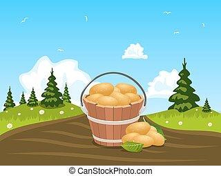 Wood bucket full of harvested potatoes