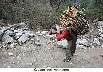 wood carrier - man carrying firewood, annapurna, nepal