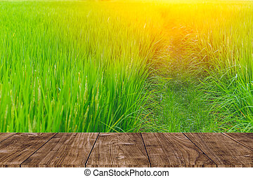 wood foreground on rice field background