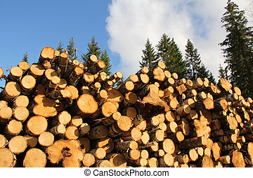 Wood Fuel in Spruce Forest - Piled up birch wood logs for to...