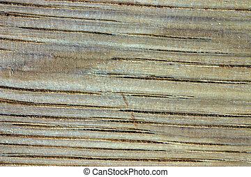 Wood Grain (Oak). - Macro image of oak grain.