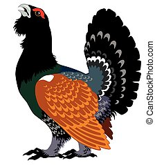 capercaillie - wood grouse,heather cock or capercaillie...