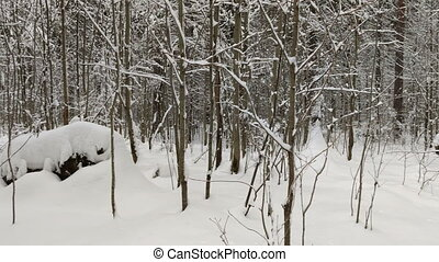 wood in snow. Winter landscape