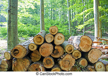 Stack of wood in the forest