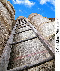 wood ladder in the barn