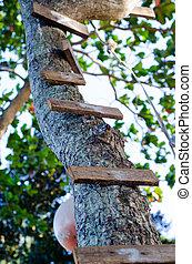 Wood ladder on tree