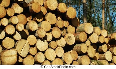 Wood large piles of cut tree trunks, round logs. Spruce...