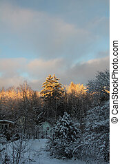 wood., lodge., winter.
