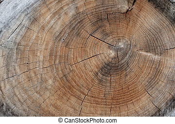 Wood log background texture with cracks and growth rings.
