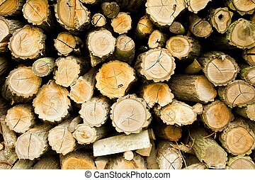 Wood log texture