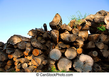 Wood logs - Background of stacked logs lit by evening sun