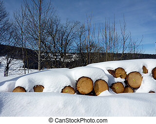 Wood logs by winter