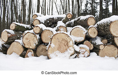 Wood Logs Covered with Snow in Forest