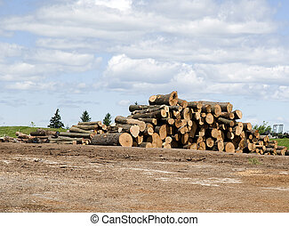 wood logs in the yard