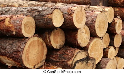 wood logs Plant industry factory
