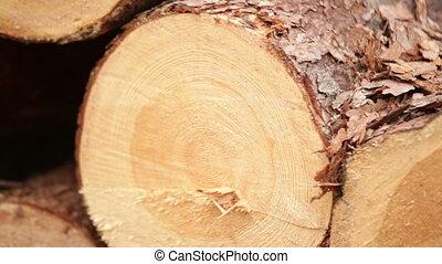 wood logs Plant working oak