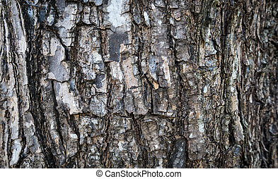 Wood or Bark texture background
