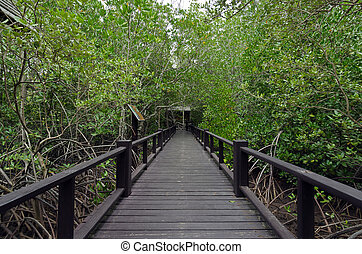 Wood passage way into mangrove forest (Trees include...
