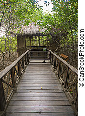 Wood pedestrian walkway in the middle of a tropical park in Guayaquil city, Ecuador