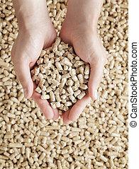 Wood pellets - Man holding Wood Pellets (used as fuel) in ...