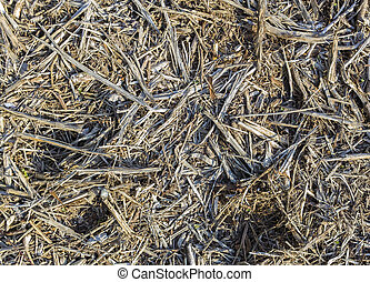wood rasp at the ground