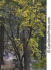 wood., sentier