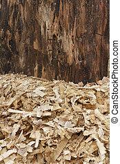 Wood Shavings - Heap of wood shavings and pillar wood...