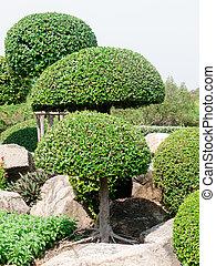 Wood shrubs - beautiful wood shrubs in garden