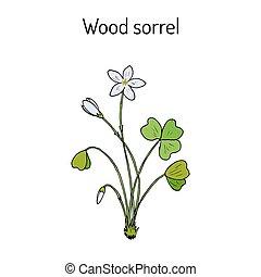 Wood Sorrel, Wild flower - Wood Sorrel Oxalis acetosella -...