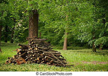 Wood stack on the forest