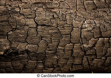 Wood texture background close up 9