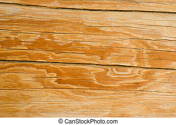 Wood texture background, old log.