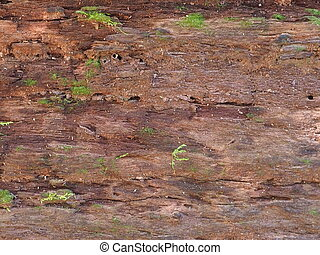 Wood texture blackgrounds.
