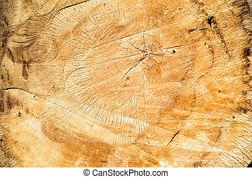 Wood texture of cut tree close up image